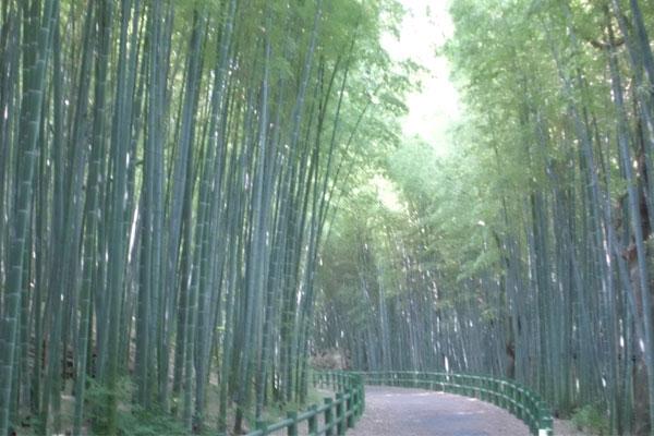 http://aichi-koen.com/makino/makino-shisetsu/takenokomichi/