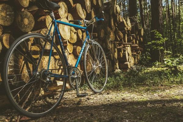 江戸川サイクリングロード!TDL、寅さん、関宿城を自転車で巡る。