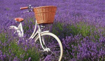 ロードスターを生んだ国イギリスの、自転車メーカーを調べてみた!